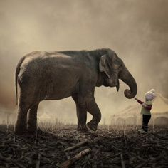 Elephant-and-enfant. john drysdale