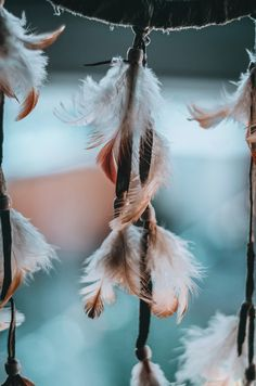 Hope is the feather that reminds us we have wings.