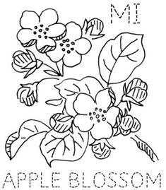 site has embroidery outlines and color photos of state flowers