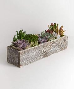 48 Awesome Repurposed Succulent Planters Ideas - Succulents are perfect plants for dry gardens and are easy to root and grow. Once you learn how easy it is to propagate succulent plants, it's a great. Succulent Planter Diy, Succulent Centerpieces, Hanging Succulents, Succulent Arrangements, Cacti And Succulents, Succulent Boxes, Cacti Garden, Succulent Care, Cactus Plants