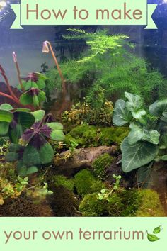 Need a DIY project? Let's make a terrarium 🌿! Click here and you will figure out how to make your in no time at all! You won't need a lot of resources, so what are you waiting for? #terrarium #DIY #project #craft #handcraft #plants #enclosure #landscape
