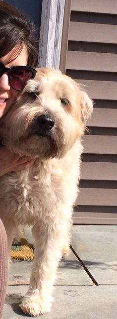 BULL TERRIER dog TiNY FIGURINE brindle puppy HANDPAINTED MINIATURE Resin SM MINI