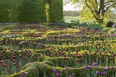 Wonderful planting of tulips by Tom Stuart-Smith - Broughton Grange