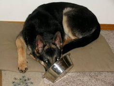 Pet Food – What to Store and How