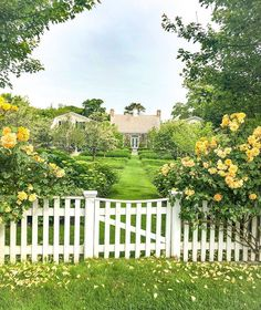 "One of the many stunning landscape designs in Edgartown. This one is a little ""out of the box"" with its climbing roses in this yellow… Landscape Designs, Climbing Roses, Secret Places, Garden Paths, Stepping Stones, Garden Design, Earth, Yellow, World"