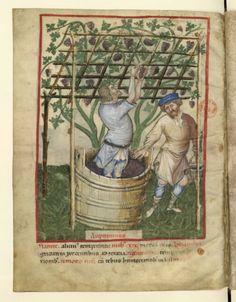 Nouvelle acquisition latine 1673, fol. 103v, Saison : automne