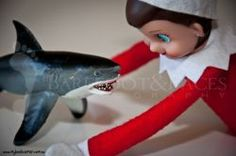 elf on the shelf shark