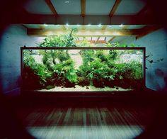 Gigantic aquarium Takashi Amano