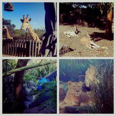 australia taronga zoo