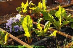 El jardín de la alegría : Pensamientos entre hortalizas