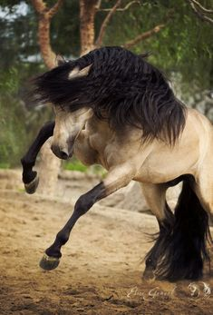 e ♞ collection nature animal cheval horse pferde horse caballo .e ♞ collection nature animal cheval horse pferde horse caballo . Cute Horses, Pretty Horses, Horse Love, Horse Photos, Horse Pictures, Animal Pictures, Nature Animals, Animals And Pets, Cute Animals