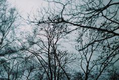 #birds #analogcamera #35mmfilm #zenit