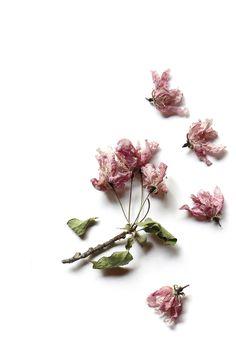crepe paper blossoms | STILL (mary jo hoffman)
