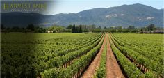 Napa winery tours, Sonoma wine country guide and transportation from California Wine Tours Sonoma Wineries, Napa Valley Wineries, Napa Winery, Napa Sonoma, Vacation Trips, Vacation Spots, Vacation Travel, Best Honeymoon Spots, Honeymoon Destinations