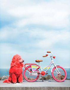 pink poodles + fun bike