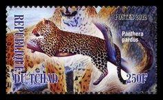 Chad - 2012 FAUNA - Leopard [Panthera pardus]