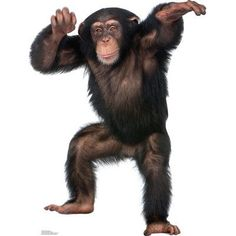 Advanced Graphics Young Chimpanzee Cardboard Stand-Up