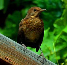 ps-pictureshop: Fauna, Flora, Tiere, Vögel, Fische, Insekten, Blum...