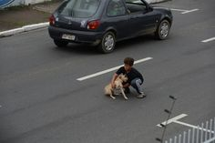 Boy stops traffic to help a small injured dog off the road [3 pictures]