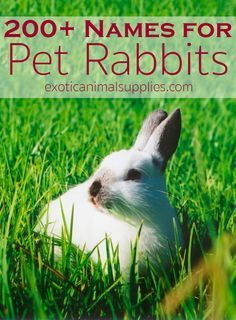 Name ideas for pet rabbits and bunnies. Over 200 names for male or female rabbits and even rabbit pairs. Plenty of names for boy and girl bunnies. # Pets names Bunny Names & Ideas for Pet Rabbit Names - Exotic Animal Supplies Boy Rabbit Names, Female Rabbit Names, Female Pet Names, Bunny Names, Cute Animal Names, Cute Puppy Names, Cute Names, Pet Bunny Rabbits, Pet Rabbit