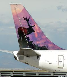 Boeing aircraft picture ( rear view of a commercial flight = rear view of a rear too = ''Oh DEER '' at least it's not a bear/bear arse ! That would be an even bigger 'bummer' 😄✅ Aviation Image, Aviation Art, Drones, Airplane Painting, Commercial Plane, Aviation Humor, Airplane Decor, Jumbo Jet, Gas Turbine