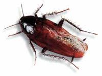 7 Pest Control Ideas to Help keep your home Pest Free - http://www.provenpest.net/7-pest-control-ideas-to-help-keep-your-home-pest-free?utm_source=rss&utm_medium=Sendible&utm_campaign=RSS
