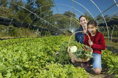 How to Use a Small Farm for Tax Write-Offs thumbnail Farm Business, Growing Business, Farm Layout, Homestead Farm, Homestead Layout, Homestead Survival, Future Farms, Market Garden, Mini Farm