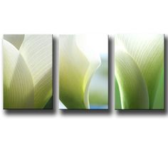 Abstract Wall Art Lily White Canvas Panels Triptych Botanic Photos