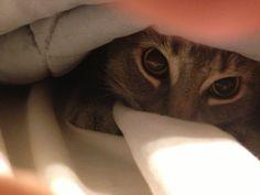 :)  cat