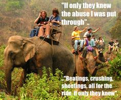 Tourists contributing to the abuse of Asian Elephants.