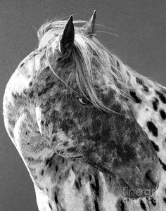 Leopard Appaloosa ~Carol Walker