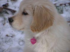 Maisy as a puppy!