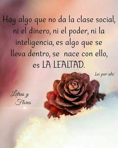 Spanish Phrases, Spanish Quotes, Woman Quotes, Life Quotes, Positive Phrases, Funny Phrases, New Memes, Love Words, Spiritual Quotes