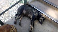 Sleeping Dog Man