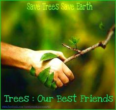 Write school papers, essay on trees our best friend - Muslim Voices