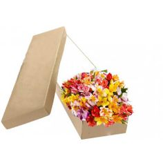 Make someone day special with sending flowers in San Jose. Order freshest flower bouquet and hand delivered right to your door in San Jose, CA. Online Flower Shop, Send Flowers Online, Cut Flowers, Fresh Flowers, Colorful Flowers, Peruvian Lilies, Online Florist, Flower Delivery, Different Colors