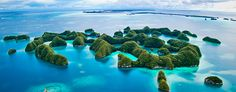 Sam's Tours is Palau's premier scuba diving and eco-adventure company. Different Types Of Sharks, Amazing Places On Earth, Big Sea, Quito Ecuador, Underwater Photography, Scuba Diving, Tourism, Vacation, Paisajes