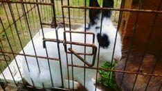 Animals Reportedly Left to Drown in Flood Water Deserve Justice - ForceChange Bunny Island, Indoor Rabbit Cage, Post Animal, Rabbit Hutches, Stop Animal Cruelty, Cute Animal Pictures, Animal Rights, Animal Rescue, Pets