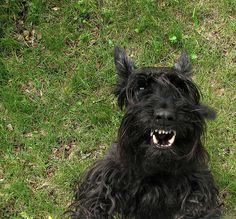 and your little dog too! (© Observe The Banana / Flickr