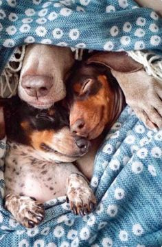 Dogs napping