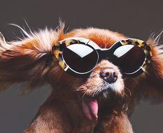 Karen Walker makes the case for dogs in sunglasses - Elle