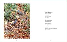 """""""Tree Teachings"""", a shadorma published in These Trees, a coffee table book by photographer Ruthie Rosauer. © F.I. Goldhaber. http://goldhaber.net/poetry.php#Others"""