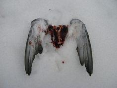 assas de um anjo arrancadas