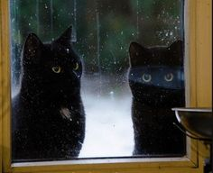 Beautiful black snow cats!!