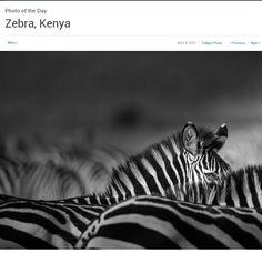 Chiaroscuro, Wildlife Photography, National Geographic, Kenya, Animals, Animales, Animaux, Animal, Animais