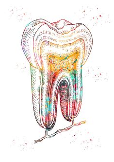 Dentist Art, Dentist Clinic, Anatomy Sketches, Art Sketches, Dental Posters, Human Teeth, Pharmacy Design, Medical Anatomy, Decoration
