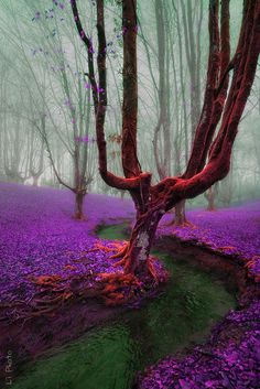Misty Morning | Amazing Pictures - Amazing Pictures, Images, Photography from Travels All Aronud the World
