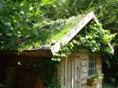 green-roof-shed-with-vine.gif (648×486)