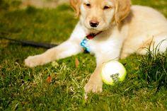 Nala    #Puppies #Photography