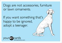 Dogs are not accessories, furniture or lawn ornaments.   If you want something that's happy to be ignored, adopt a teenager.